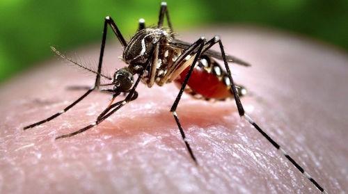 La Amenaza de Zika Nunca Desapareció