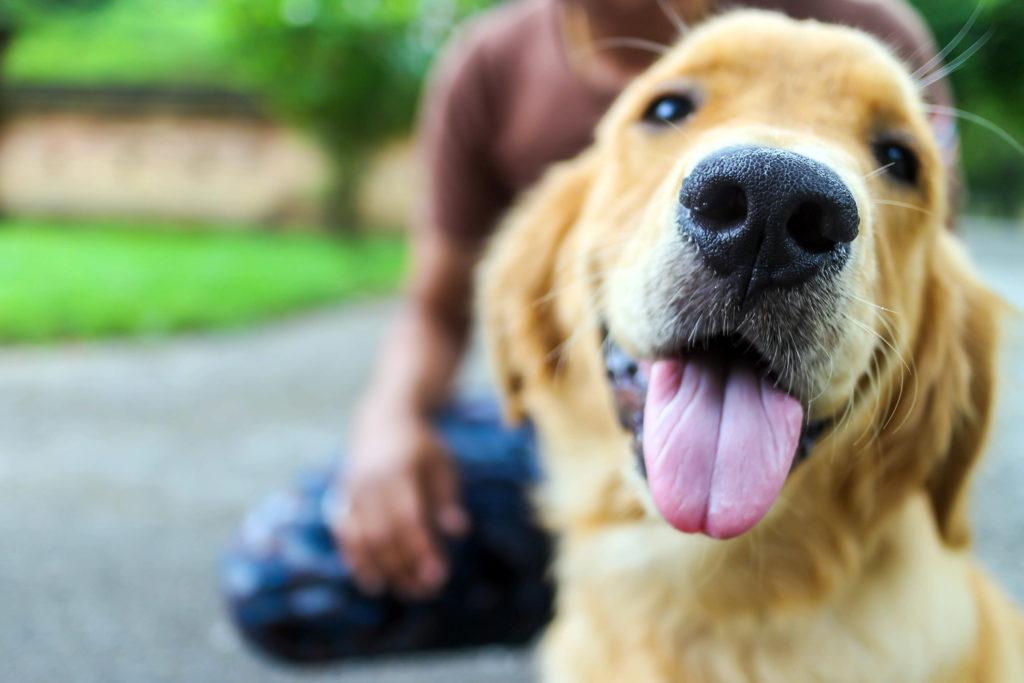 ¡Que no le Engañen Cuando Vea a un Lindo Cachorrito en el Mostrador!